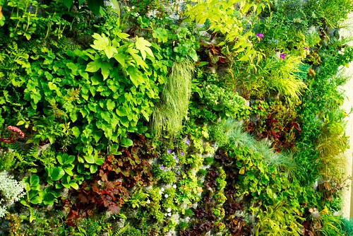 Green wall Vancouver terrace