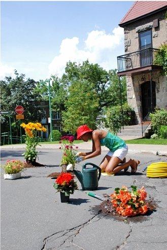 Flowers adorn a pothole, Montreal