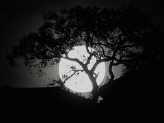 Twilight (Ru Tover) Tags: moon tree night twilight nightshot vampire full phase wolfman moonphases phases damncool inspiredbylove beautifulphoto kartpostal nightmoonfullmoon paololivornosfriends