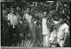 A group of young field assistants with a specimen of a fishtail palm