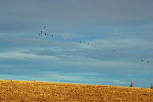 wild flight, 334/365