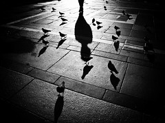 The Pigeon Whisperer (August Brill) Tags: milano interno7 piazzaduomo