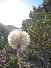 a wish, 138/365