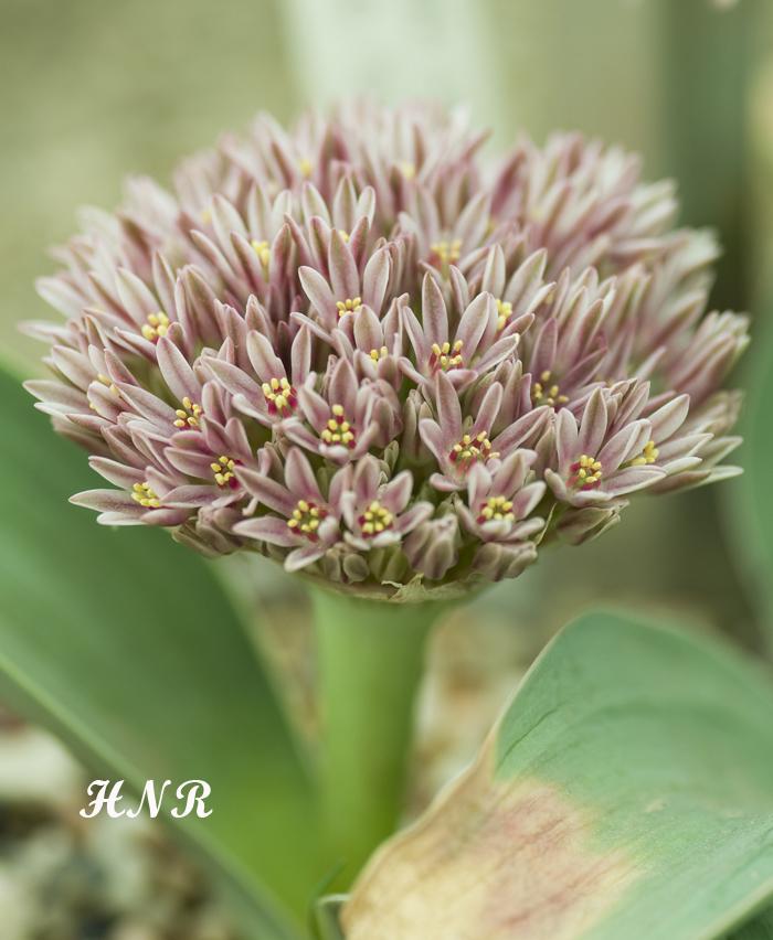 Sanki bir demet çiçek :)