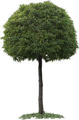 Tree Snip