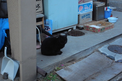 Today's Cat@20091221