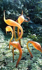 A ray of sunshine on Chihuly's Sunset Herons.