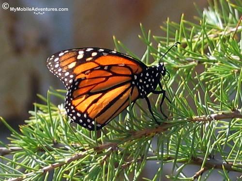 IMG_0454-WDW-MK-butterfly