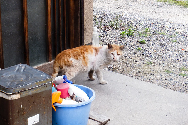 Today's Cat@2011-06-05