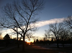 76/365/3 (f l a m i n g o) Tags: park morning tree sunrise march photo colorado sunday group picture 9th arvada iphone 2014 project365 365days