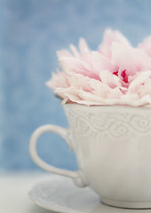 A peony from the garden (MayaLee Photography) Tags: pink blue white cup shop tea bokeh peony etsy