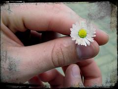 ..ve ne siete accorti che mi piacciono i fiori? ;Op (fi0na) Tags: trip texture photoshop lago hand finger main nail fingers rosa nails giallo mano daisy fiori gita fiore bianco medio dita margherita indice dito mignolo margherite fiorellino unghie unghia pollice anulare viverone fiorellini ritocco margheritina lagodiviverone kurtolo81 digimaxa50kenoxq2