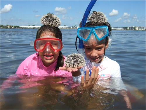 Finding Sea Urchins!