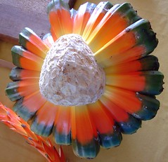 Fruit of the Hala or Puhala Tree seed pod (colleeninhawaii) Tags: tree fruit hawaii pod oahu seed fresh lei honolulu dried hala pandanusodoratissimus puhala
