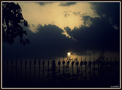 Rise upReach the Skies!!! [Explored #347] (D a r s h i) Tags: flowers trees sunset sky cloud sun flower tree nature bar clouds sunrise fence bars silhouettes fresh fencing rise rods pune adalaj darshi ahemedabad