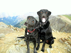 Pups on Handies Peak