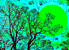 Trees Looking Up at Green Moon (Rusty Russ) Tags: california new york city blue light arizona sky sun moon france color tree green leave sol apple up look night forest photoshop manipulated stars solar photo yahoo big google interesting flickr day image air creative picasa system yukon jersey cs newsroom northern curved universe comet hue enchanted scraper newburyport imageediting stockimages wizards saturate manipulate funnypictures stumbleupon imagesphotos coolimages creativedigital freeimage colorimages creativepictures freeimages colorfulimages graphicsimages hotimages pictureimages aboutinteresting picturresof