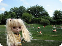 Francoise and the Flamingos