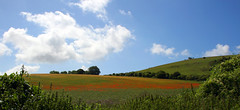 Sussex (rachael_gibs) Tags: uk summer field landscape sussex poppy panarama poppyfield