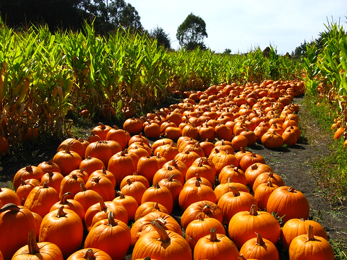 Arata Pumpkin Farm