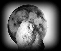 Nera moon