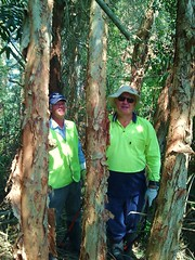 Len and Mike find evidence of a cricket game (GreenFingersLandcare) Tags: portmacquarie bushregeneration greenfingerslandcare