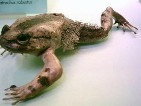 04_horror-frog