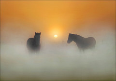 Dawn Dreams (adrians_art) Tags: winter horses mist fog sunrise frost equine mywinners thepowerofnow