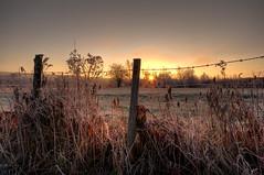 Et si le soleil disait vrai? (Sous l'Oeil de Sylvie) Tags: morning cold rural sunrise frost pentax champs qubec campagne gel froid hdr matin leverdesoleil beauce fense piquets sigma1020mm gele cloture frimas hdrenfrancais notredamedespins pentaxk7