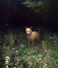 Dog (Aron Wiesenfeld) Tags: plants flower overgrown grass leaves butterfly fly weeds erin aaron insects bee aron wiesenfeld weisenfeld wiesenfield weisenfield