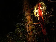 an der Pforte zum Weihnachtsmannland... (Froschknig Photos) Tags: light dark star licht darkness band stern dunkel dunkelheit rotes froschknig michau earthnight weihnachtsausstellung sonydsch50 wwwblumenlandenglerde froschknigphotos