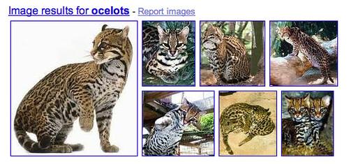 Google Large Images