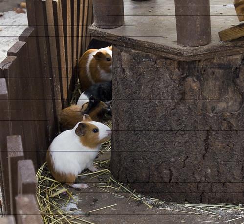 可愛動物園區 愛寶樂園 韓國之旅