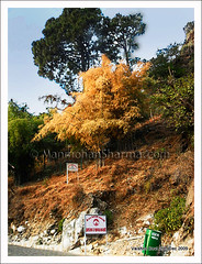 Fall colors at Vaishno Devi (~Ms point of view~) Tags: winter india fall jk durga maa vaishnodevi