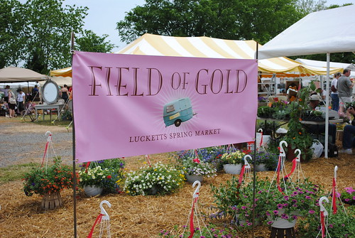 The Field of Gold at the Lucketts Spring Market