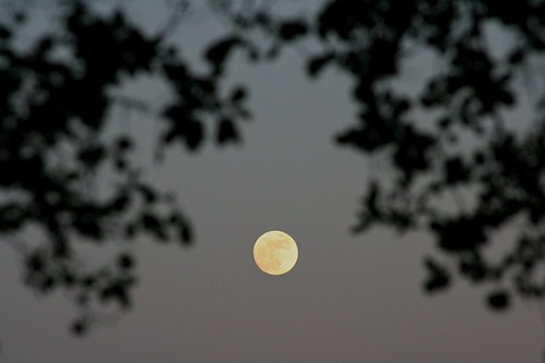 Day 165 - Full Moon