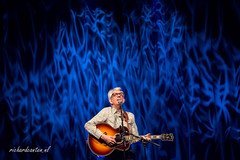 Nick Lowe (Richard Canten) Tags: netherlands paard paardvantroje nicklowe richardcanten