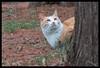 Stalking prey (hej_pk / Philip) Tags: fuji fujifilm fujixa1 xa1 gwangju kwangju sydkorea vinter winter katt cat skog woodland czjtessar50mmf28 tessar carlzeiss ausjena manualfocus manual