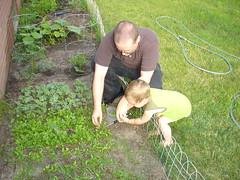 2009.06.22-1stHarvest.01.jpg