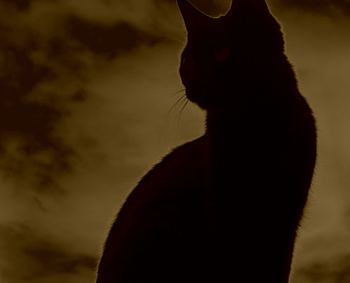 550 Black Cat on Red Sky