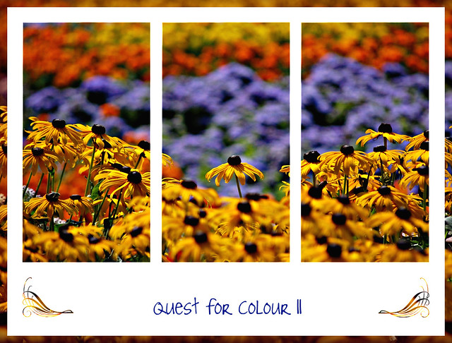 quest for colour II . . . .