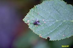 mosca (Paolo Fats) Tags: chamonix funivia mosca montblanc montebianco merdeglace ghiacciaio parapendio ghiacciai hotelalpina