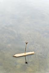 Lihou slipway pooh stick