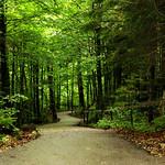 .road to disney thumbnail