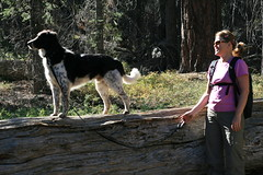 Loki & Linda tree trunk (Pinezanita, California, United States) Photo