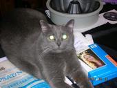 Pics of Your Pets 3906896404_13f458e157_o