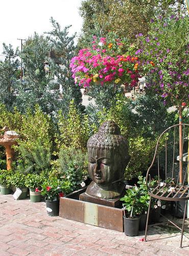buddha million bells plants