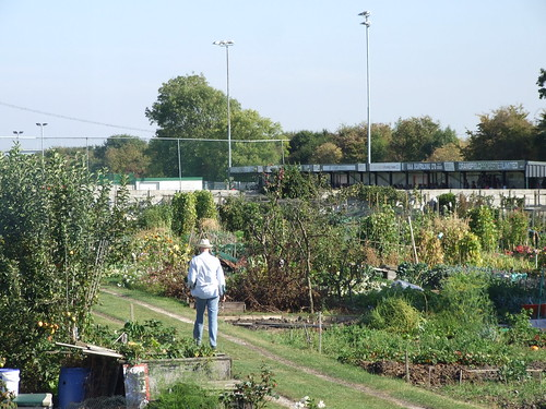 Allotments at North Ferriby.