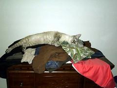 Flip-Flop Kitty