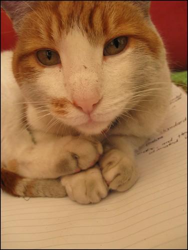 mucky ginger cat